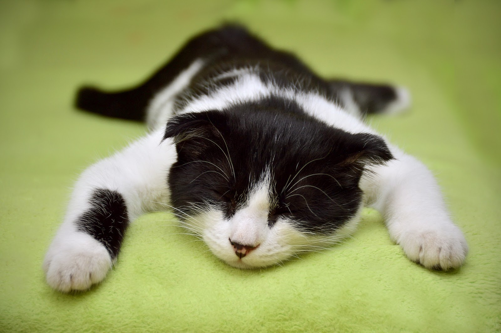 Think Your Cat's Lazy? Think Again!