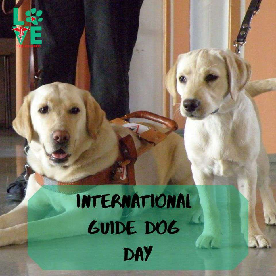 International Guide Dog Day Wishes For Facebook