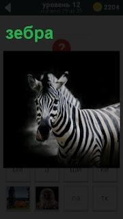 На темном фоне изображение рода лошади зебра с черно белыми полосками на туловище