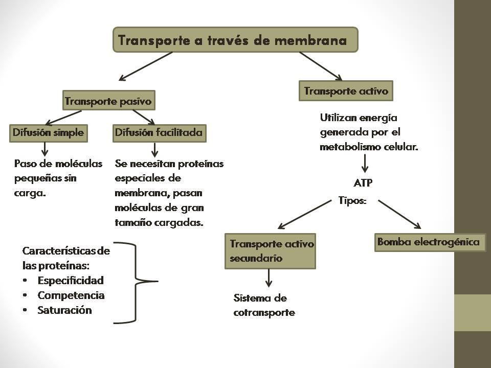 Prácticas para metabolismo hidrocarbonado bajo