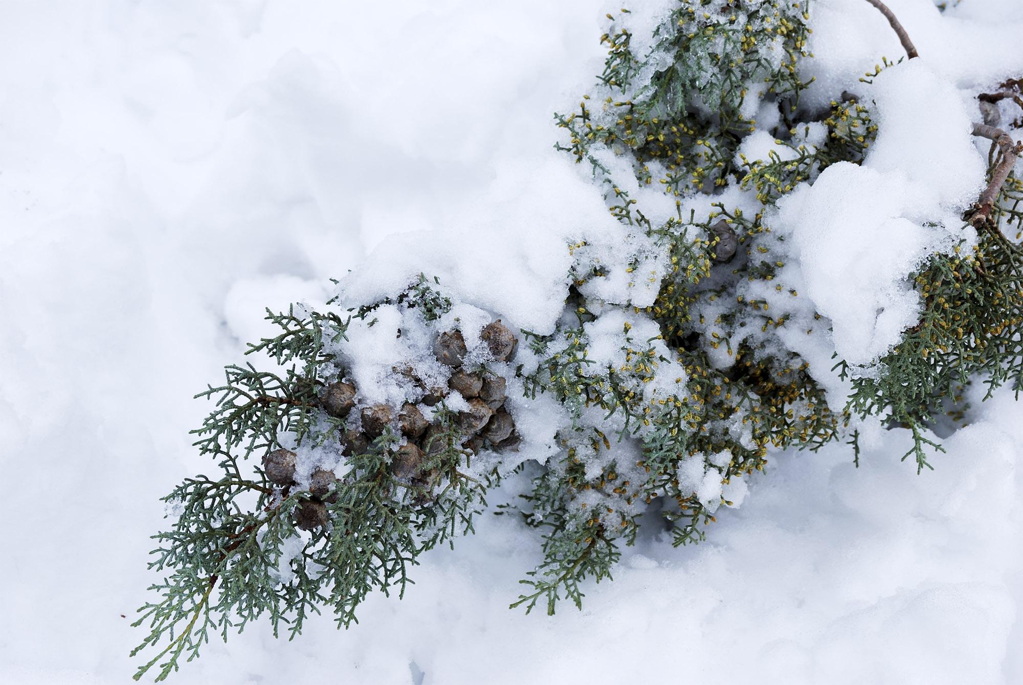 Snow Madrid