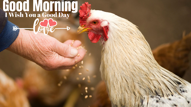 Good Morning image With Hen