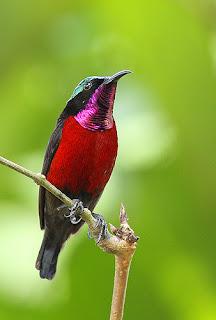 Foto Burung Kolibri Daftar Harga Terbaru