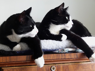best Black and white tuxedo cat names