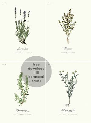 http://www.adailysomething.com/2013/03/free-printable-botanical-prints-01.html