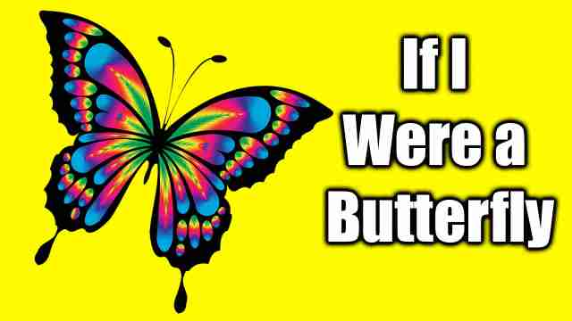 IF I were a Butterfly essay Image
