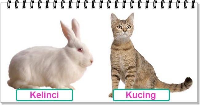 Kucing dan Kelinci