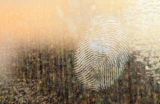 Lack of fingerprints may be a so-called beneficial mutation for criminals, but is a loss of characteristics. It is the opposite of evolution.
