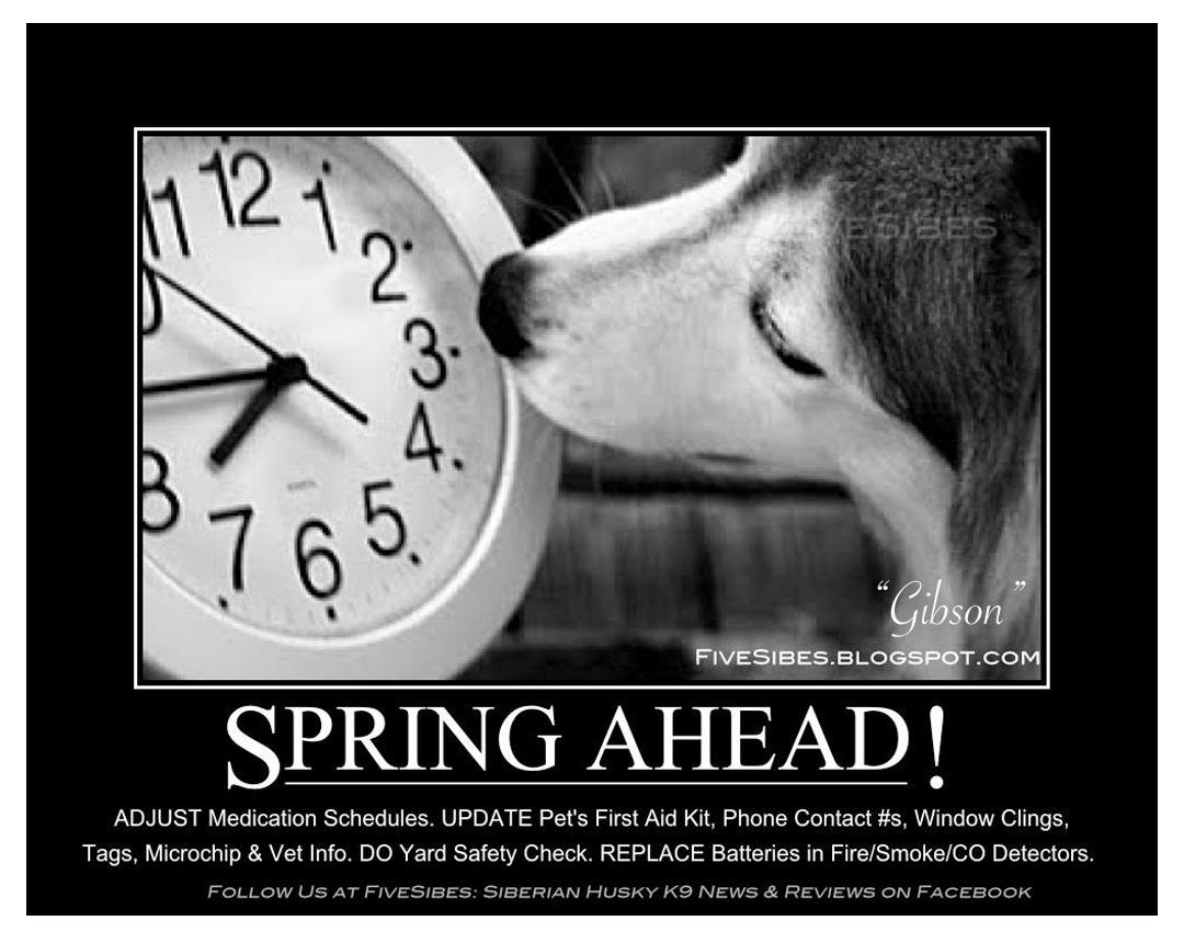 FiveSibes™: Clocks Spring Ahead! Time to Adjust Pet ...
