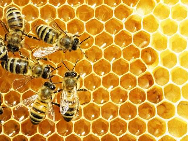 Διαβάστε γιατί το μέλι το λένε και υγρό χρυσάφι