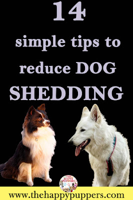Excessive shedding in dogs: causes, treatment, home remedies
