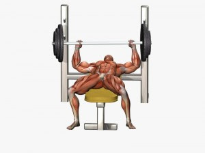 bench press Phase 2: The Midpoint