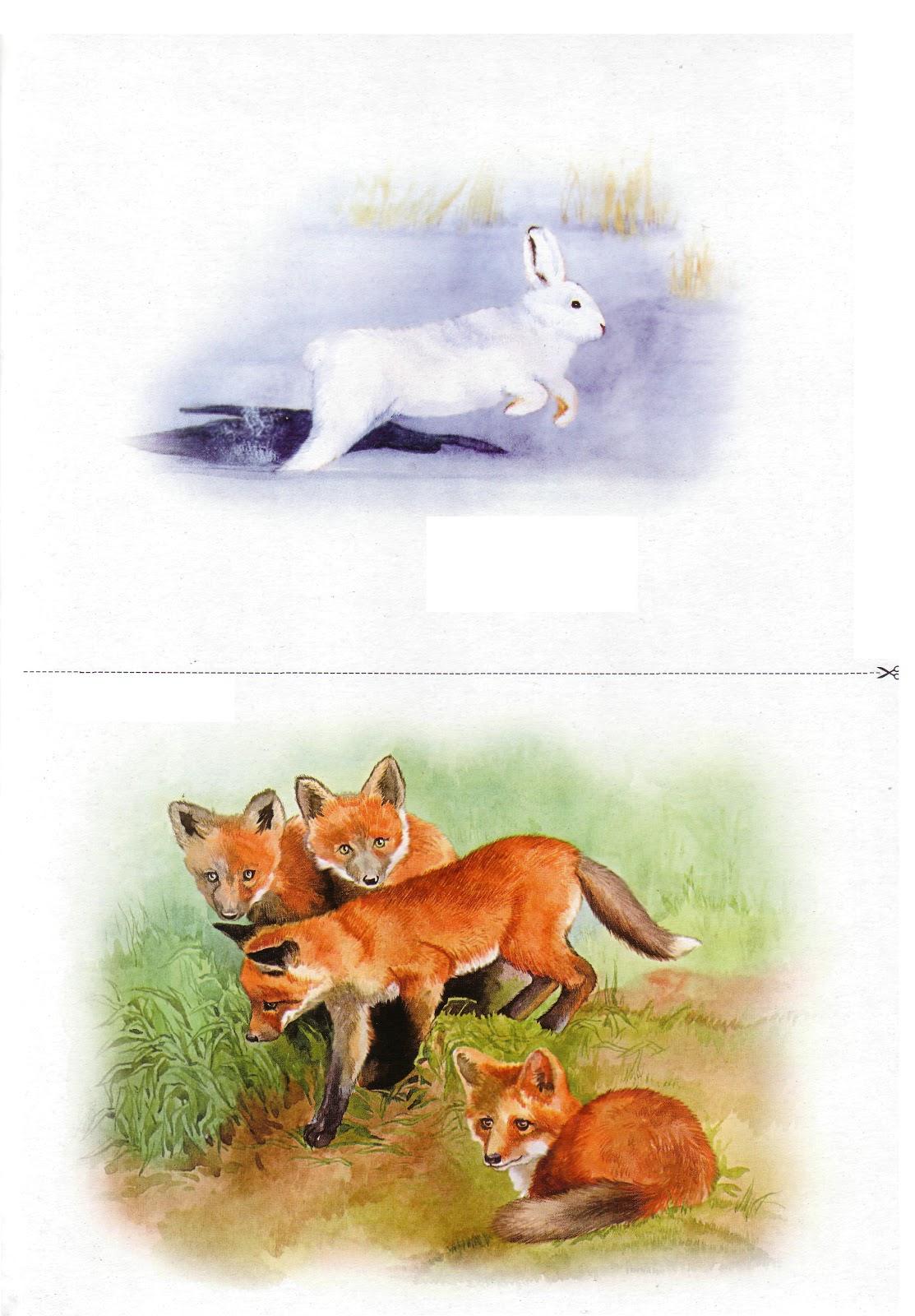 предметные картинки животным активные добавки