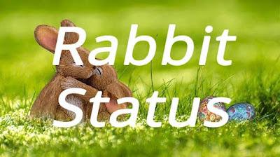 Rabbit Status