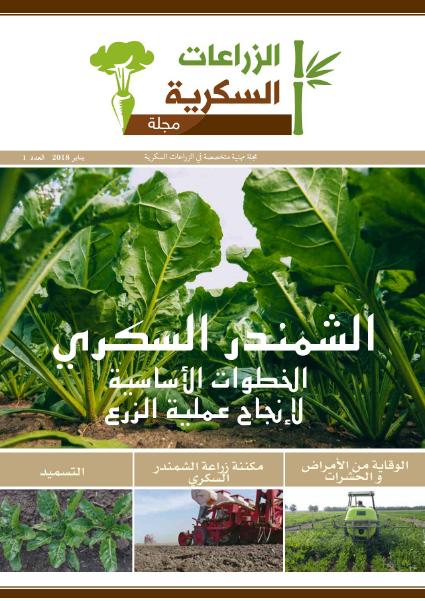 مجلة الزراعات السكرية : الشمندر السكري - الخطوات الاساسية لآنجاح عملية الزرع -