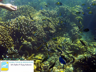 Indonesia surga snorkeling dan diving