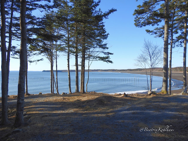 Herring Cove Bay, view point