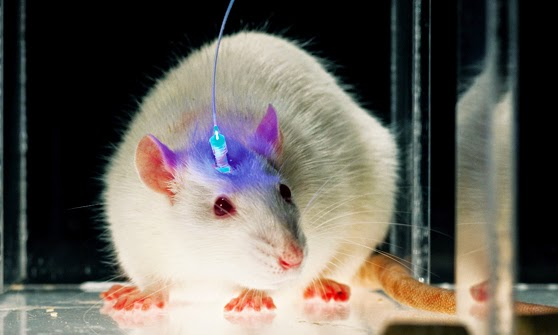 optogenetik