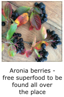 aronia berries - the superfood you will find everywhere