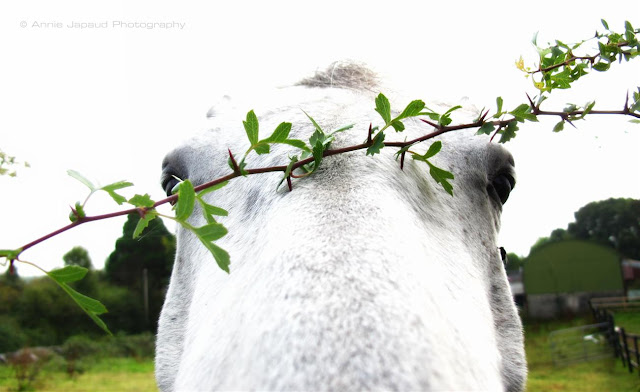 goofy horse photo with a branch on the horse's head