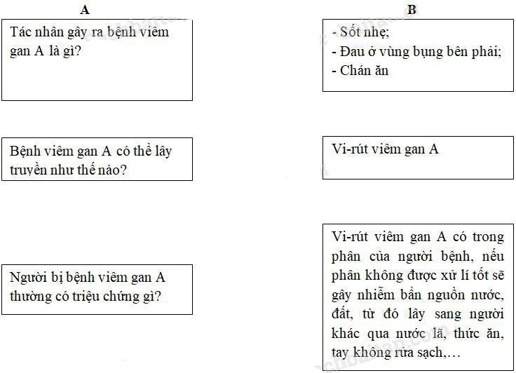 Giải Vở bài tập Khoa học lớp 5 bài 15