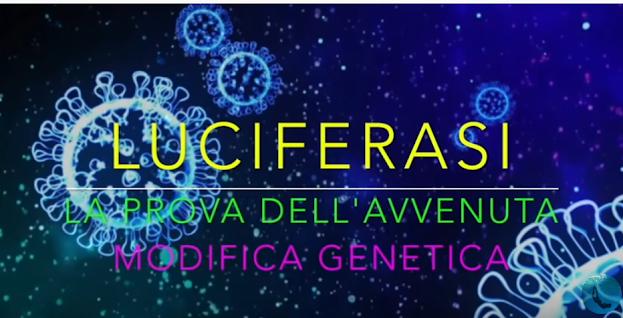 LICIFERASI - La prova dell'avvenuta modifica genetica