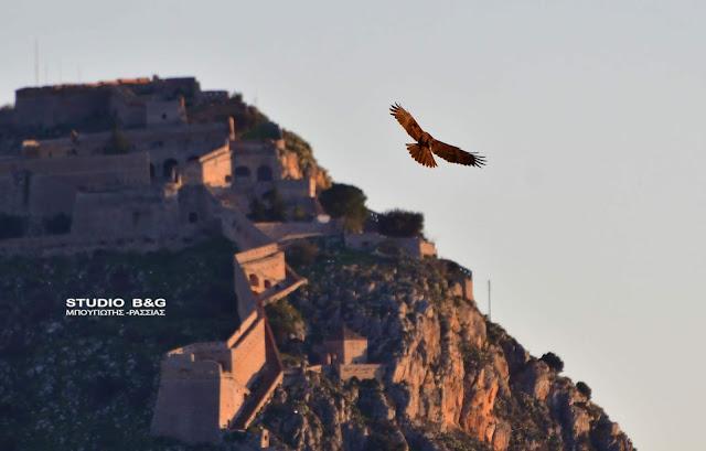 Η φωτογραφία της ημέρας: Ο Καλαμόκιρκος