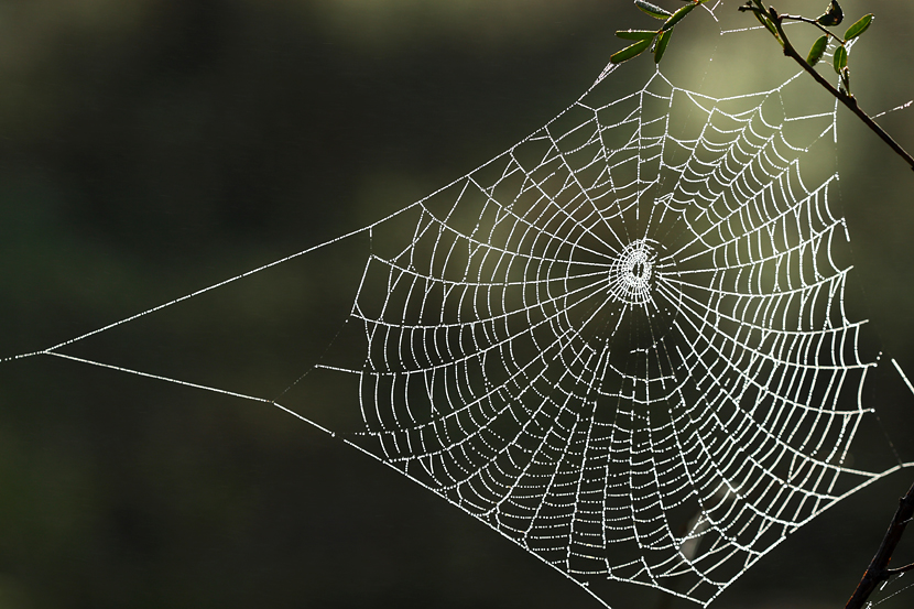Room 5: Spider Poetry