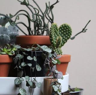 Instagram o roślinach.