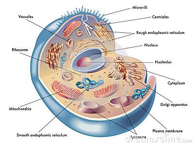 koshika kya hai fundamental unit of life 9th class biology