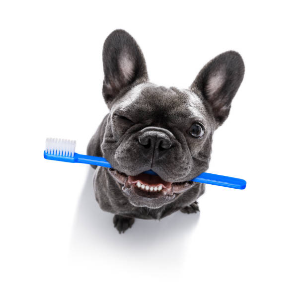 Oral Health for Dogs – How Diet Influences It