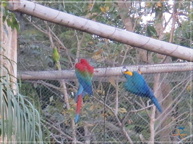 Bird Land - Hot Park - Rio Quente - Goiás