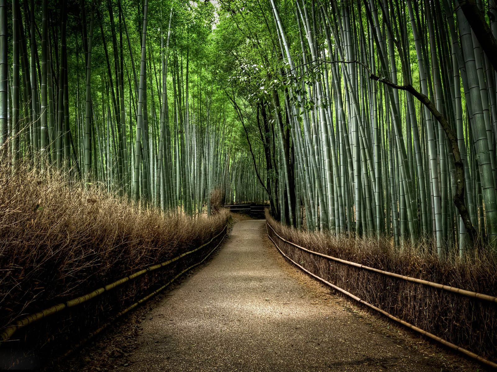 Home Design Software Free Cnet Wallpapers Bamboo Forest Wallpapers