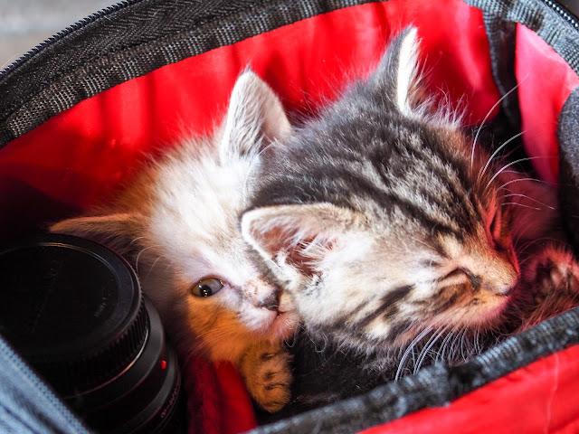kittens 6 weken