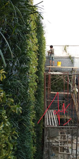 Tukang taman vertical bojonegoro