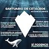Sí  Podemos propone crear un santuario de cetáceos en Fuerteventura