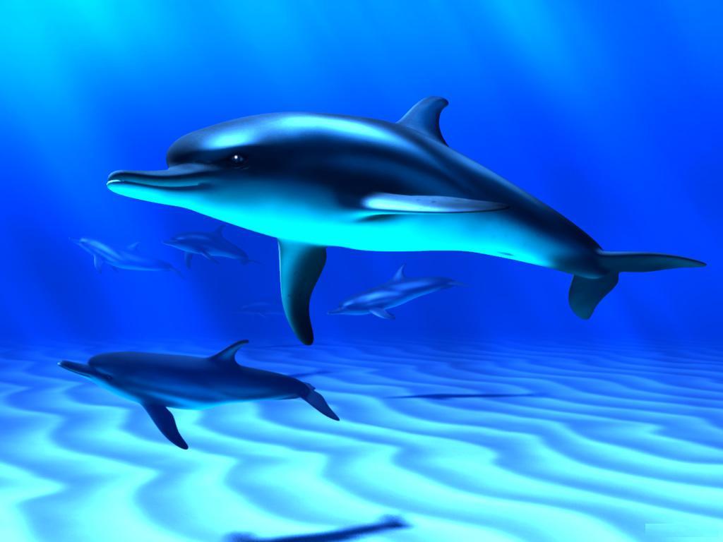 Beautiful Fish HD Desktop Wallpapers | Hasnat wallpapers ...