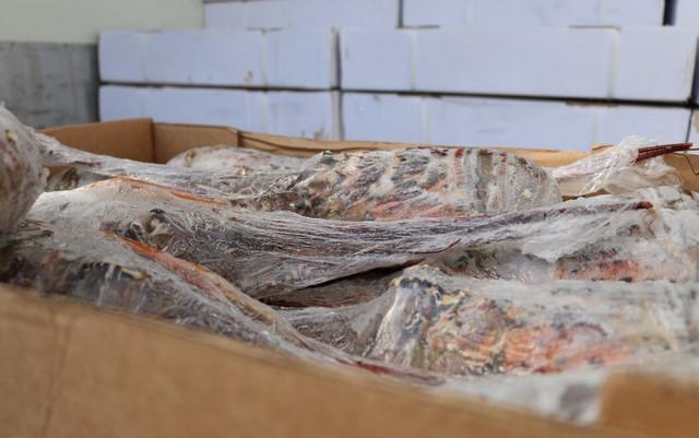Após roubar oito toneladas de lagosta no RN, assaltantes tentam vender carga para vítima e são presos na Bahia