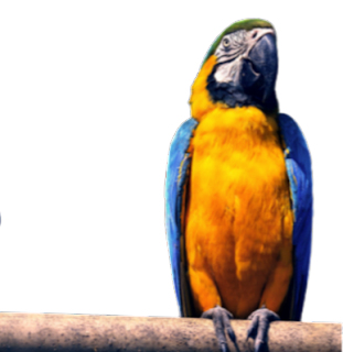 standing parrot png