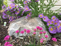 pink and purple flowers with rock