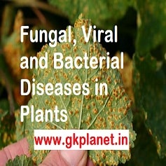 Plant Diseases Caused By Fungi Bacteria Virus Etc