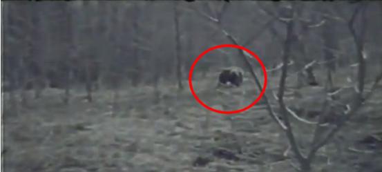 Captan a un hombre lobo en el bosque de Anahuac