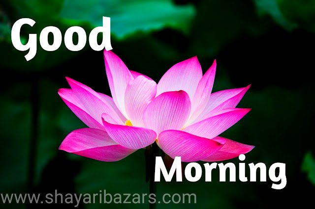 Good Morning Flower Images Free Download