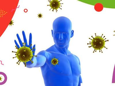 Localización sistema inmunológico
