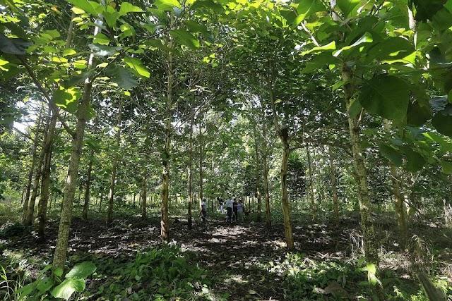 Costa Rica entre finalistas de prestigioso galardón mundial por el programa Pago de Servicios Ambientales