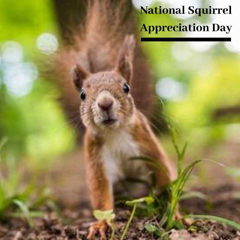 National Squirrel Appreciation Day Wishes Awesome Images, Pictures, Photos, Wallpapers