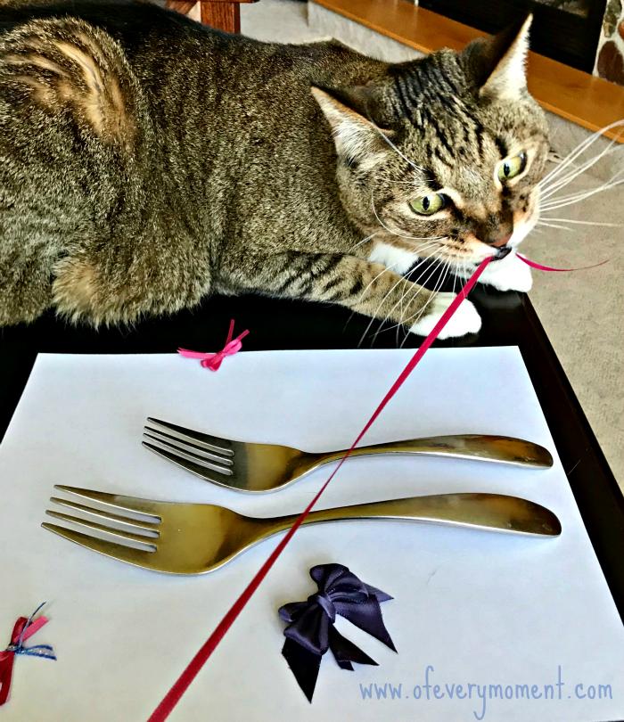 Cats love ribbons