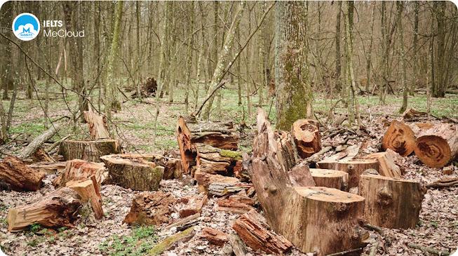 từ vựng tiếng Anh chủ đề môi trường - rừng