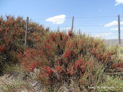 flora nativa salupe