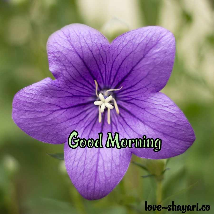 good morning natural beauty